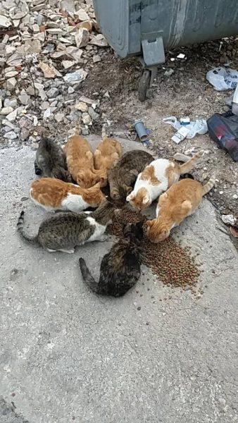 Kastrationen für Katzenpopulationen dringend benötigt!