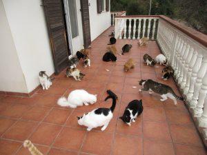 Catsterasse