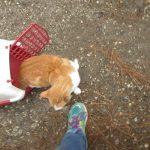 Cat NN4