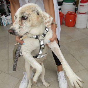 6_dog_Bea_female