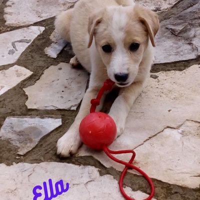 Ella_0