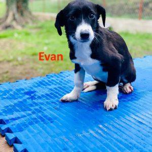 Evan_12.1.21