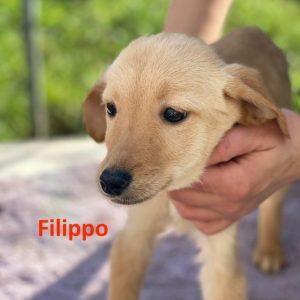 Filippo_1