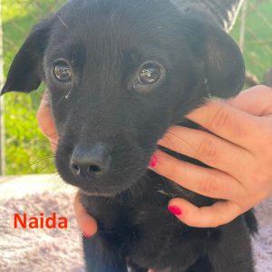 Naida_1