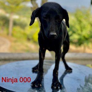 Ninja_000 (1)