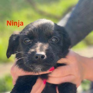 Ninja_1