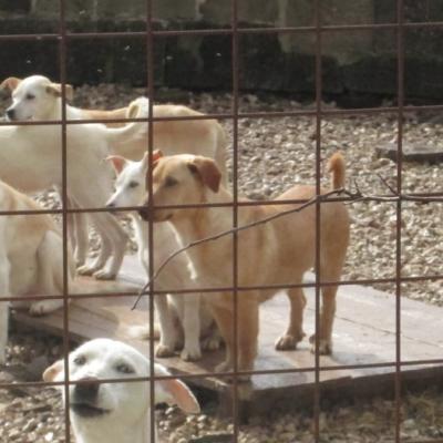 Tangela_Puppies