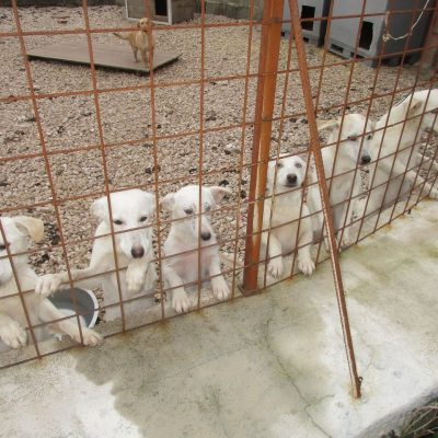 Tangela_Puppies_1