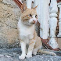 cat_red (1)
