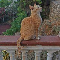 cat_red2